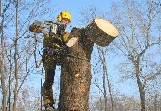 Спил деревьев в Самаре цена от 576 руб.