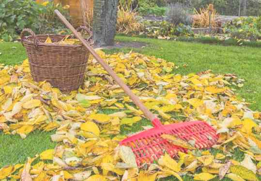 Уборка листьев в Самаре цена от 679 руб.